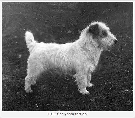1911 Sealyham